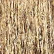Dry grass hay background - Stock Photo