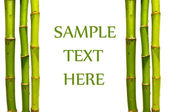 Bamboo sticks isolated with text space — Stock Photo