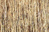 Dry grass hay background — Stock Photo