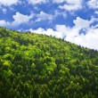 Royalty-Free Stock Photo: Green forest over blue sky