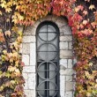 Stained-glass window in a wall covered by colorful ivy leaves — Stock Photo