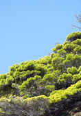 Forest against blue sky landscape — Stock Photo