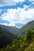 Alpine forest and sky landscape — Stock Photo