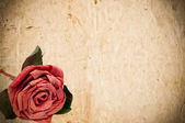 Vintage paper with red rose — Stock Photo