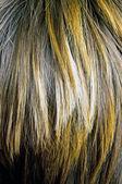 Brown woman hair — Stock Photo