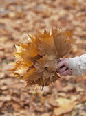Hand holding bunch of autumnal leaves — Stock Photo