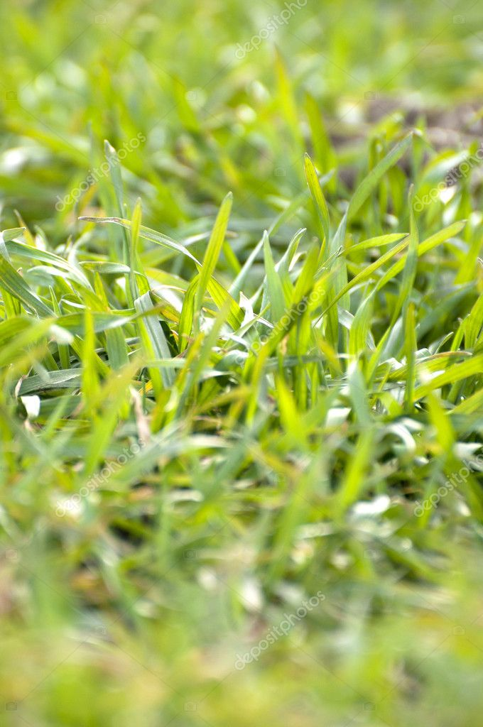Beautiful green grass texture  Stock Photo #8538830