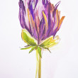 Stock Photo: Painting of purple flower