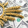 Wheat and dollar banknote in close up — Stock Photo