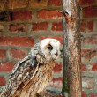 Owl in kooi — Stockfoto #8678918