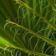 Abstract image of green palm tree leaves background — Stock Photo