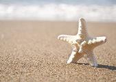 Stella di mare bianco sulla spiaggia tropicale di sabbia — Foto Stock