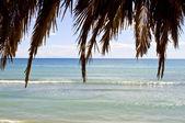 Deniz ve gökyüzü karşı palmiye yaprakları — Stok fotoğraf