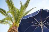 Parasol and palm trees against tropical blue skies — Stockfoto