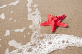 Red starfish and sea wave on sandy tropical beach — Stock Photo