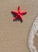Deniz yıldızı ve dalga üzerinde kum plaj - yaz konsepti — Stok fotoğraf