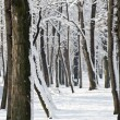 Royalty-Free Stock Photo: Snowy winter forest