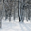 Winter time in forest — Foto de Stock