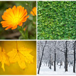 Four season conceptual collage — Stock Photo