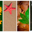 Four seasons collage — Stock Photo #8740812