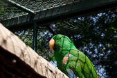 Green parrot in cage — Photo