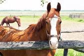 Beautiful horse on farm — Stock Photo