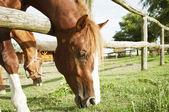 Grazing horse — Stock Photo