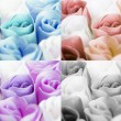 Multicolored collection of roses — Stock Photo