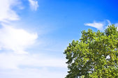 Green tree against blue sky — Stock Photo