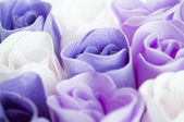 Purple roses background — Stock Photo
