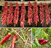 Red peppers collage — Stock Photo
