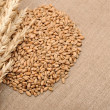 Wheat ears border on burlap background - Foto de Stock