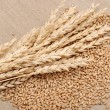 Wheat and wheat-ears on burlap closeup - Foto de Stock