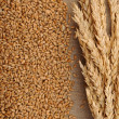 Wheat on sacking background - 图库照片