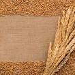 Stock Photo: Wheat ears on sacking