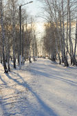 冬冬季 — 图库照片