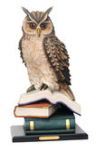 Stack of books and owl isolated on white background. concept edu — Stock Photo