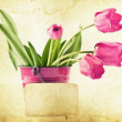Stock Photo: Vintage tulips