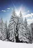 Winter with sunshine — Stockfoto