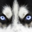 Blue eyes - Stock Photo