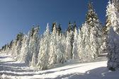 зимняя сцена — Стоковое фото