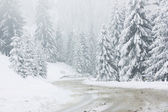 Winter road — Stock Photo