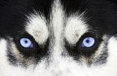 Blauwe ogen — Stockfoto