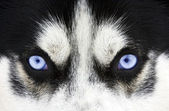 Blue eyes — Stockfoto