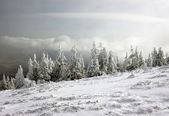 冬季现场 — 图库照片