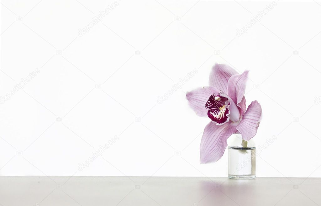 Close op on a pink lily  — Stock Photo #8819098