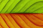 Textura de folha — Foto Stock