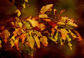 Colorful leaves — Stockfoto