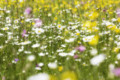 Meadow with shallow depth of field — Stock Photo