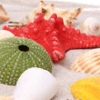 Shells and starfish on sand background — Stock Photo